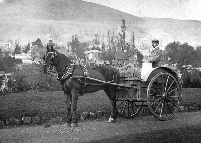 Abby Bradshaw with Guarlford Court milk float circa 1904